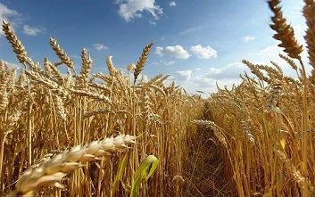 شورای قیمت گذاری محصولات استراتژیک سرانجام تشکیل شد / قیمت انواع نهاده های دامی و محصولات کشاورزی